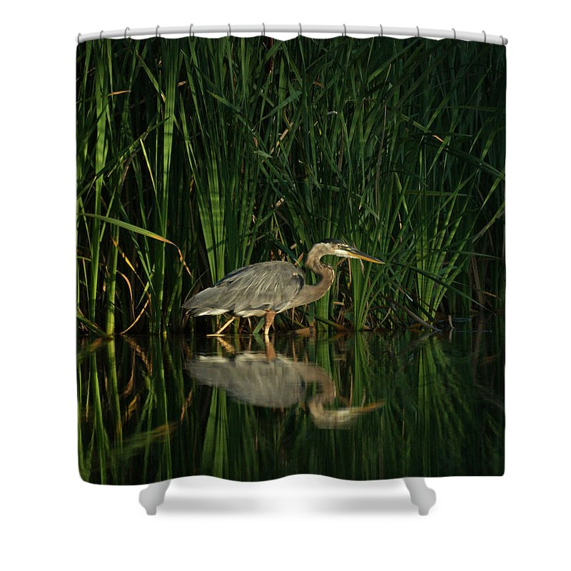 Animals Shower Curtain featuring the photograph Looking For Breakfast by Ernie Echols