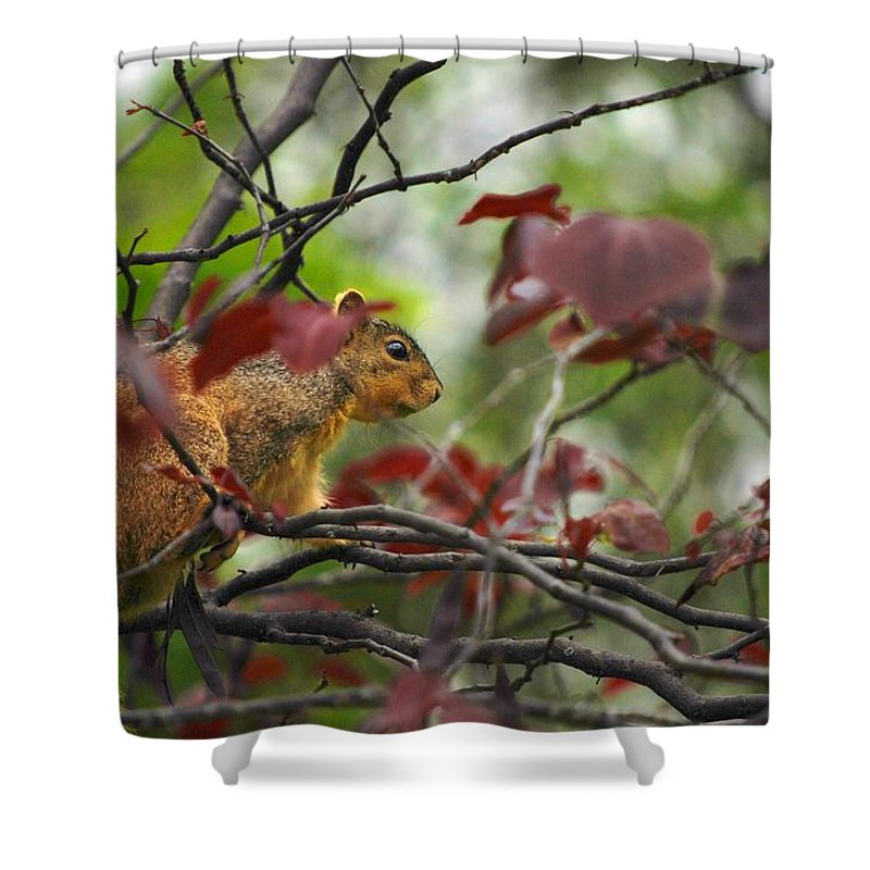 Squirrels Shower Curtain featuring the photograph Looking For Love by Donna Shahan