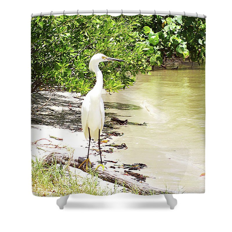 Florida Shower Curtain featuring the photograph Looking For Lunch Gp by Chris Andruskiewicz