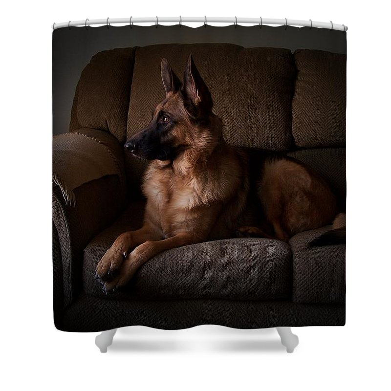 German Shepherd Dogs Shower Curtain featuring the photograph Looking Out The Window - German Shepherd Dog by Angie Tirado