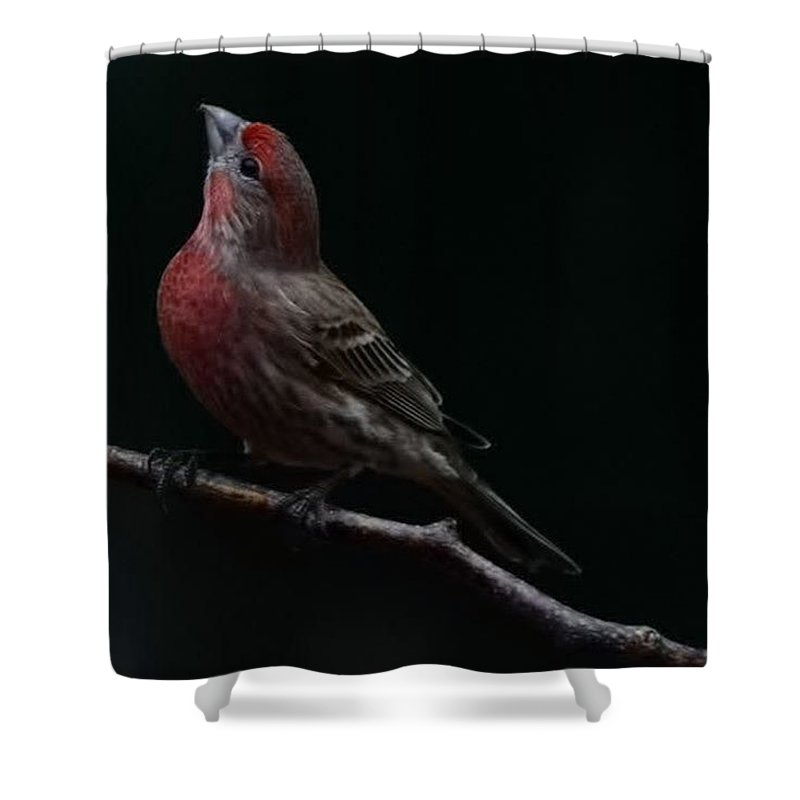 Finch Shower Curtain featuring the photograph Looking Towards Heaven by Gaby Swanson