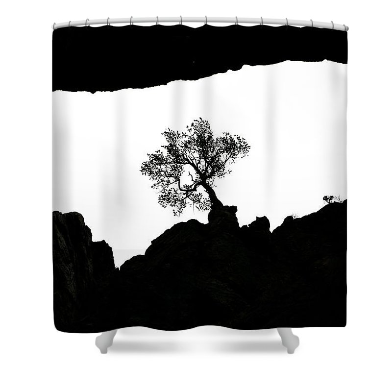 Tree Shower Curtain featuring the photograph Looking Up 2 by Marilyn Hunt