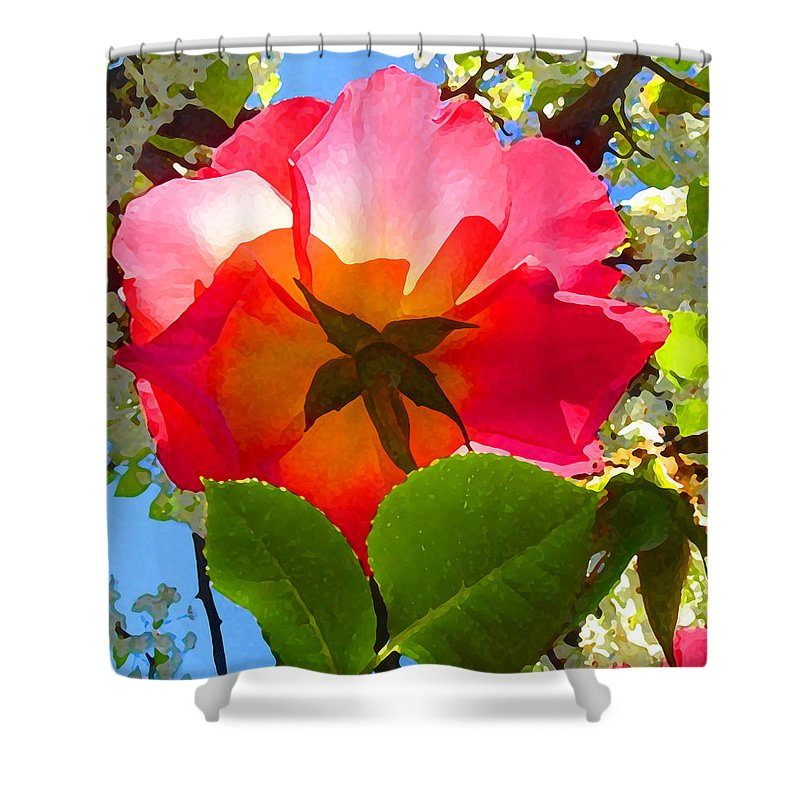 Roses Shower Curtain featuring the photograph Looking Up At Rose And Tree by Amy Vangsgard