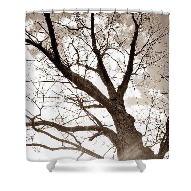 Tree Shower Curtain featuring the photograph Looking Up In Sepia by Jennifer Wick