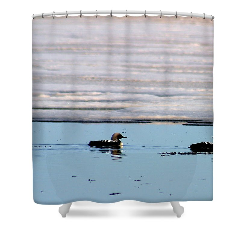 Loons Shower Curtain featuring the photograph Loon On The Arctic by Anthony Jones