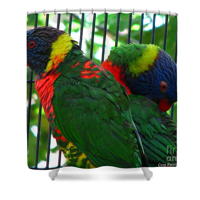Patzer Shower Curtain featuring the photograph Lory by Greg Patzer