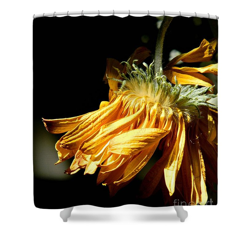 Flower Shower Curtain featuring the photograph Losing Its Luster by Anne McDonald