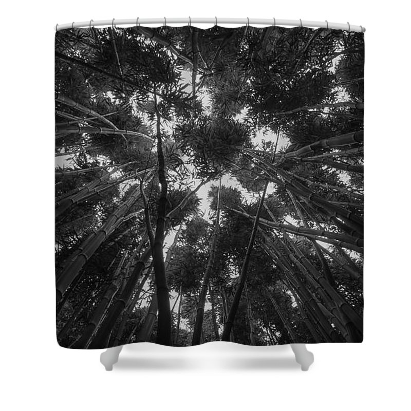 Hawaii Shower Curtain featuring the photograph Lost Among The Bamboo by William Sikora
