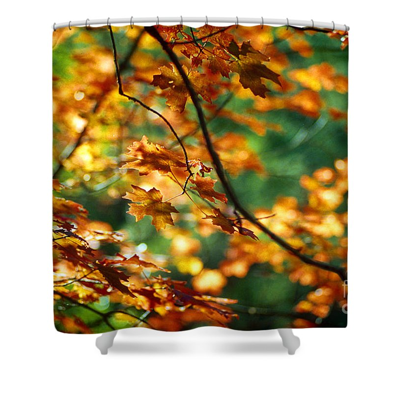 Fall Color Shower Curtain featuring the photograph Lost In Leaves by Kathy McClure