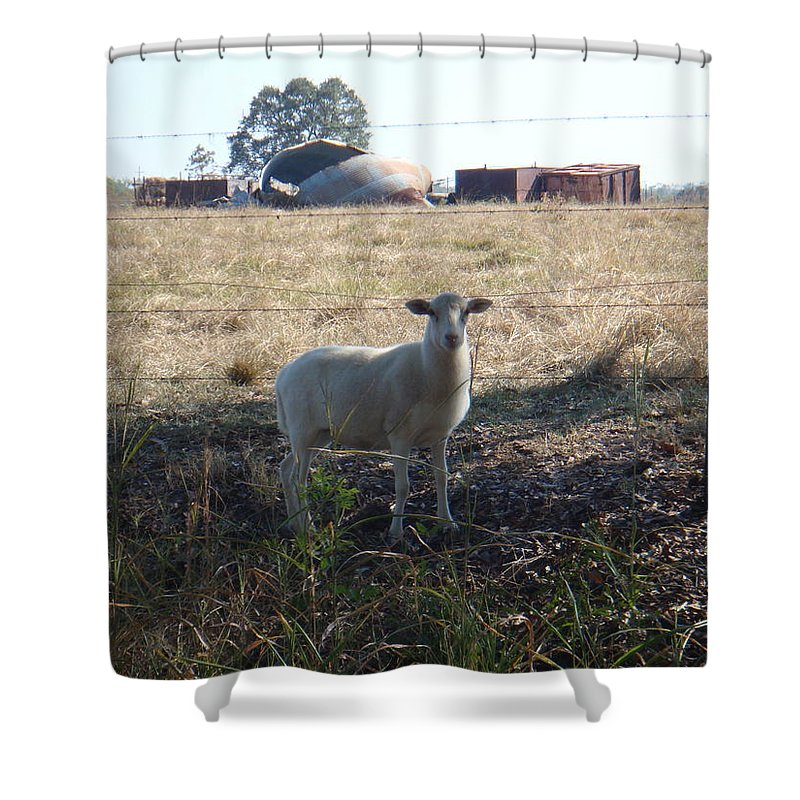 Lost Shower Curtain featuring the photograph Lost Lamb by Stacy Head