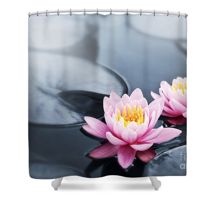 Blossoms Shower Curtain featuring the photograph Lotus Blossoms by Elena Elisseeva