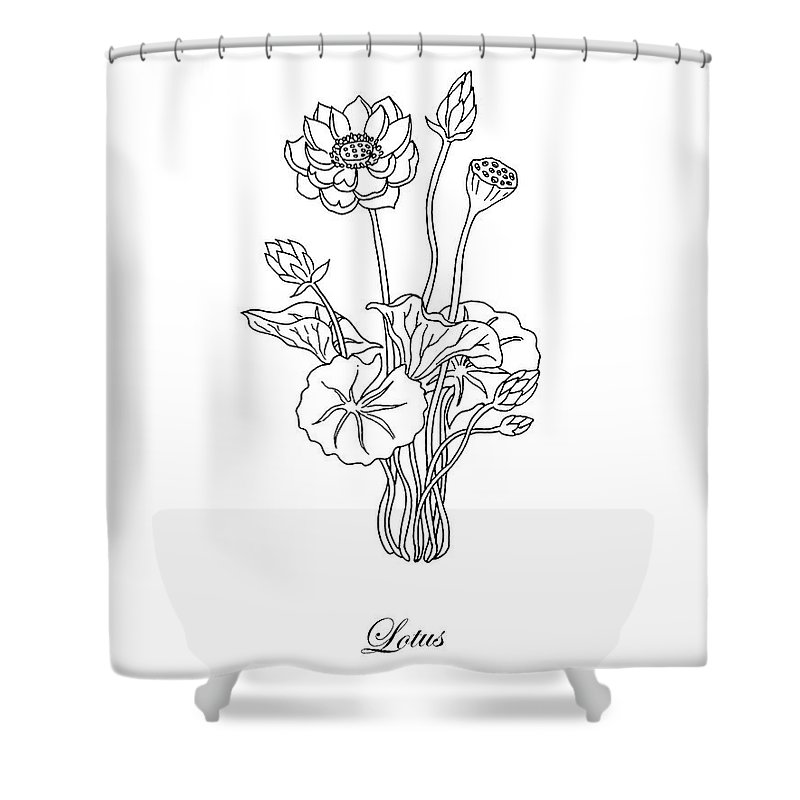 Lotus Shower Curtain Featuring The Drawing Flower Botanical Black And White By Irina Sztukowski