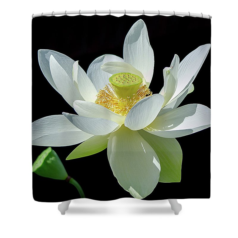 Lotus Flower Of Devotion Shower Curtain For Sale By Julie Palencia