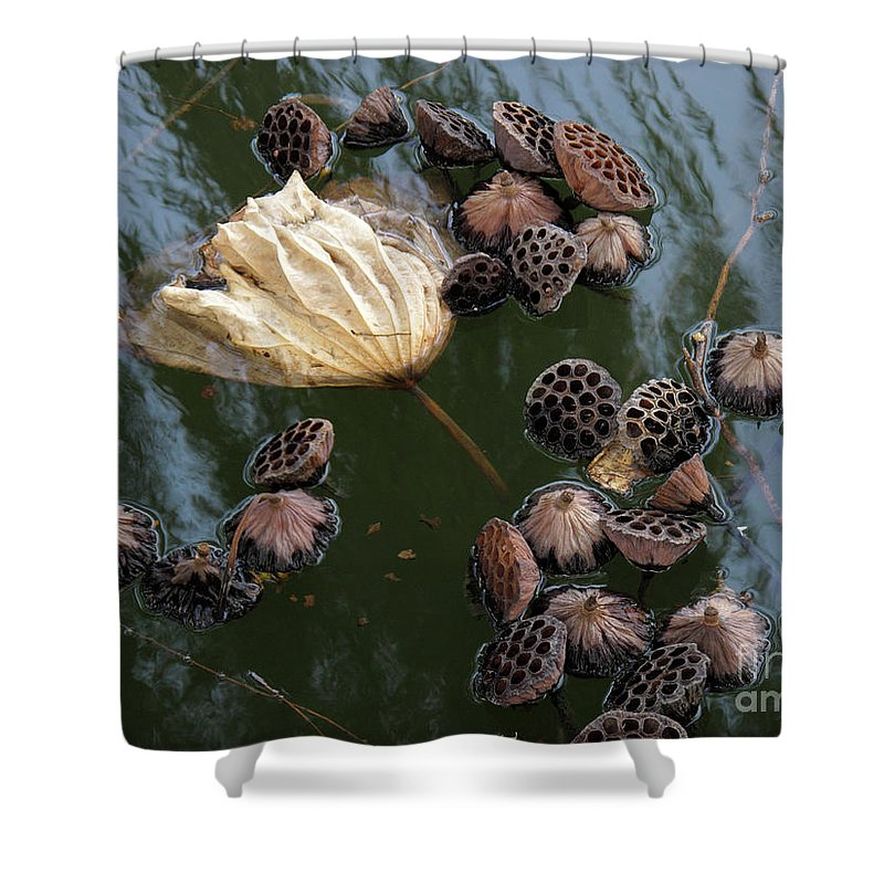 Arty Shower Curtain featuring the photograph Lotus In The Lake by Stefania Levi
