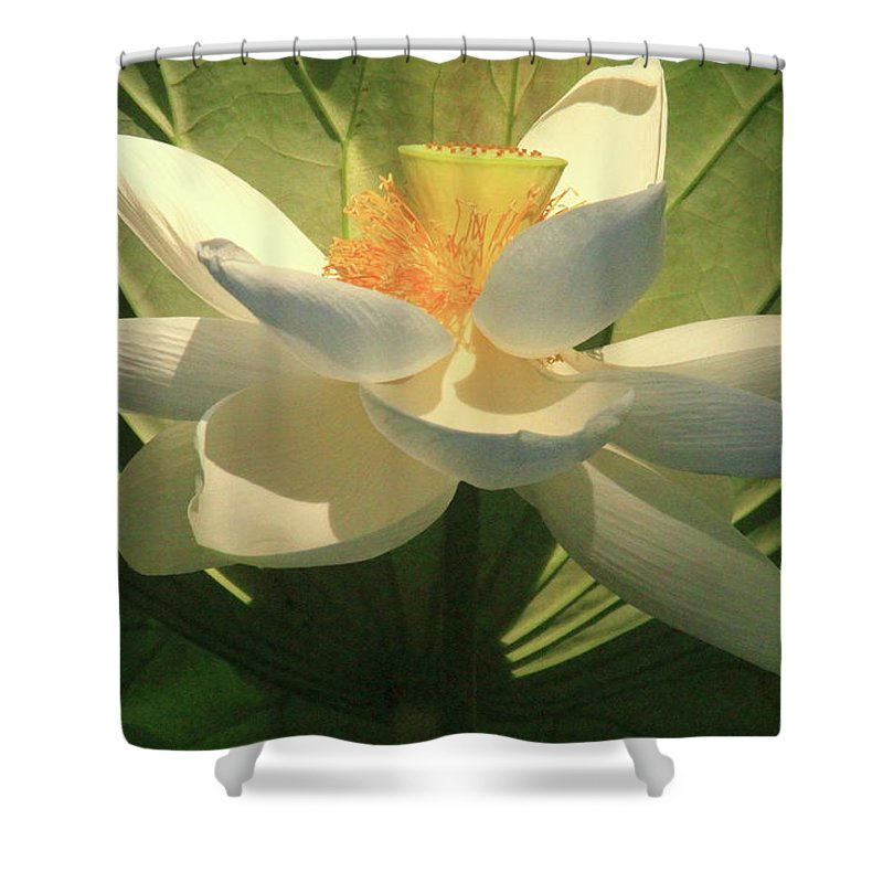 Orchids Shower Curtain featuring the photograph Lotus Light by Geraldine Scull