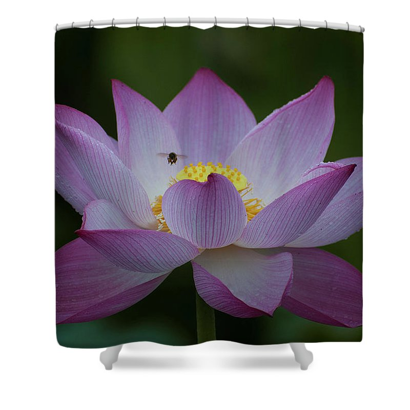 Lotus Shower Curtain For Sale By Ngoc Anh Vu