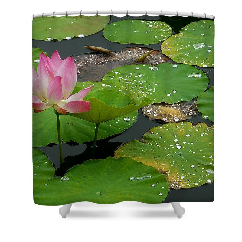 Lotus Flower Shower Curtain featuring the photograph Lotus Pond by Amber Barth