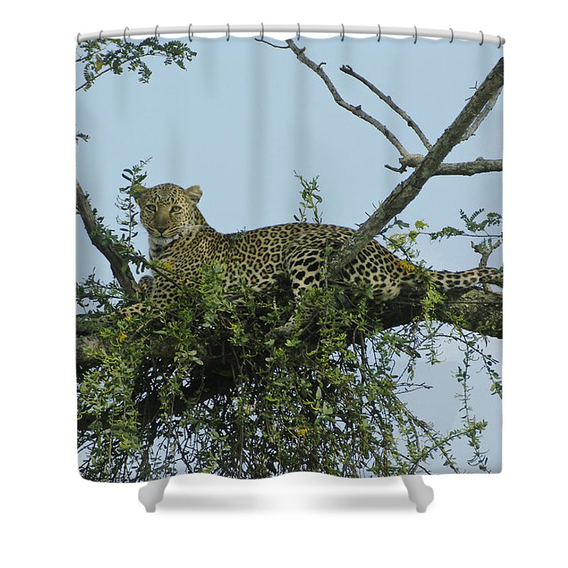 Africa Shower Curtain featuring the photograph Lounging Leopard by Michele Burgess