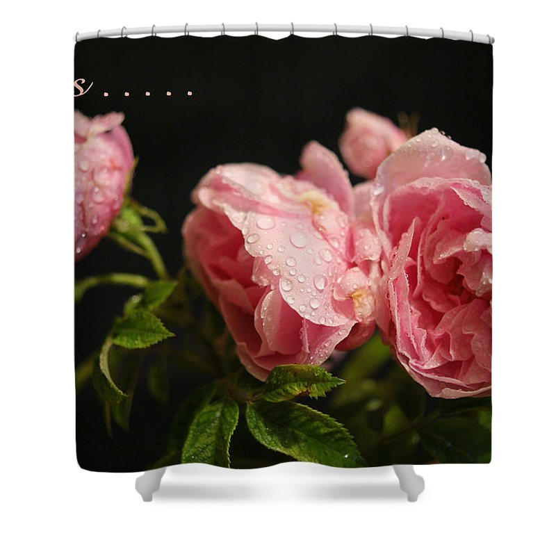 Roses Shower Curtain featuring the photograph Love Is ........ by Sandra Cockayne