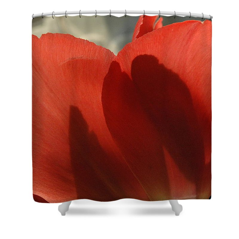 Tulips Shower Curtain featuring the photograph Love Of A Tulip by Trish Hale