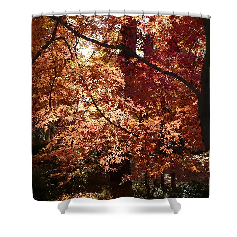 Fall Landscape Photograph Shower Curtain featuring the photograph Lovely Autumn Tree by Carol Groenen