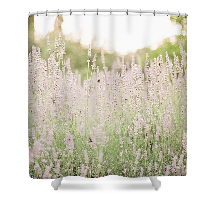 Lavender Shower Curtain featuring the photograph Lovely Lavender by Seth Mourra
