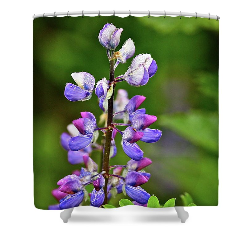 Lupine Shower Curtain featuring the photograph Lovely Lupine by Diana Hatcher