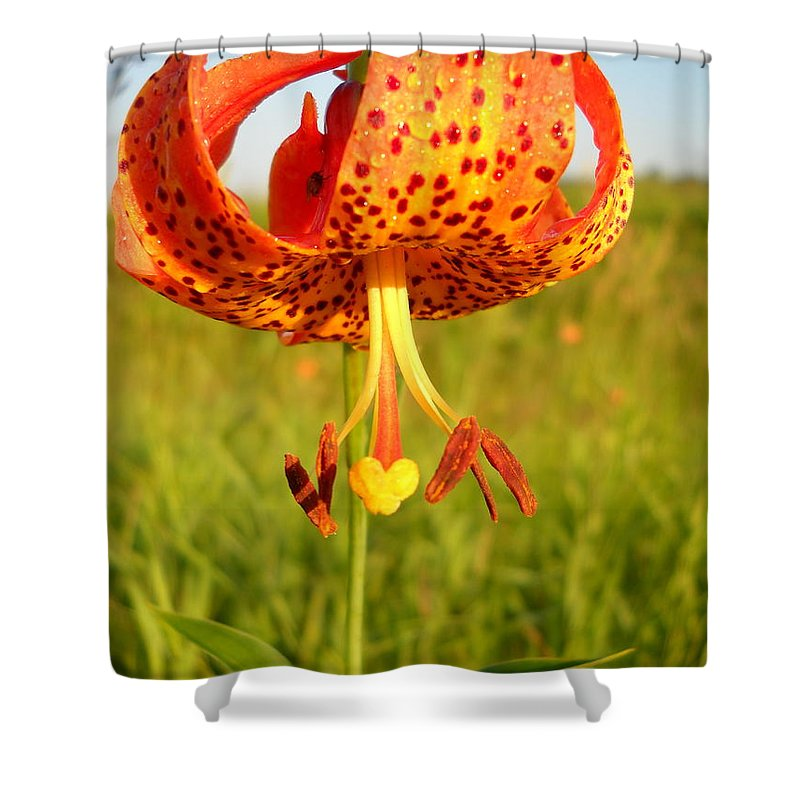 Floral Shower Curtain featuring the photograph Lovely Orange Spotted Tiger Lily by Kent Lorentzen
