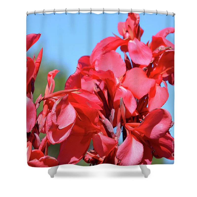 Lovely Pink Flowers Shower Curtain featuring the photograph Lovely Pink Flowers by Ruth Housley