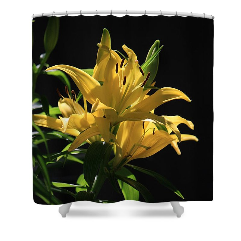 Lilly Shower Curtain featuring the photograph Lover's Lilly by Mandy Shupp