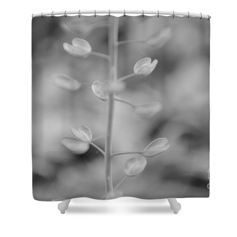 Eva Maria Nova Shower Curtain featuring the photograph Loving Greys by Eva Maria Nova