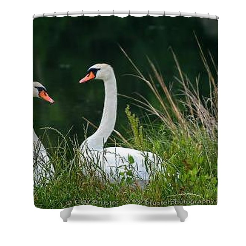 Clay Shower Curtain featuring the photograph Loving Swans by Clayton Bruster