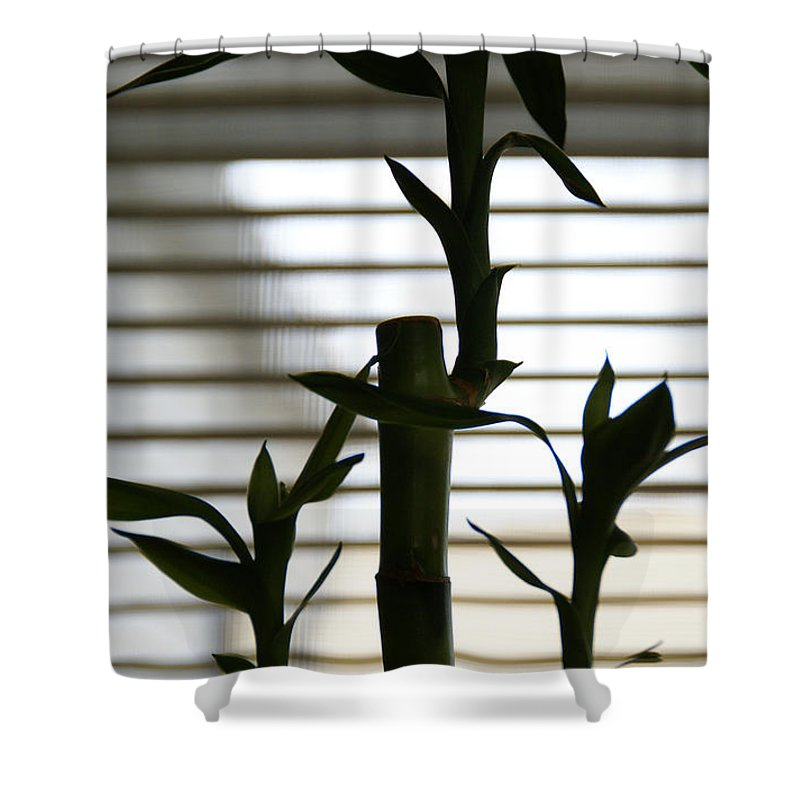 Lucky Bamboo Shower Curtain featuring the photograph Lucky Bamboo by Linda Shafer