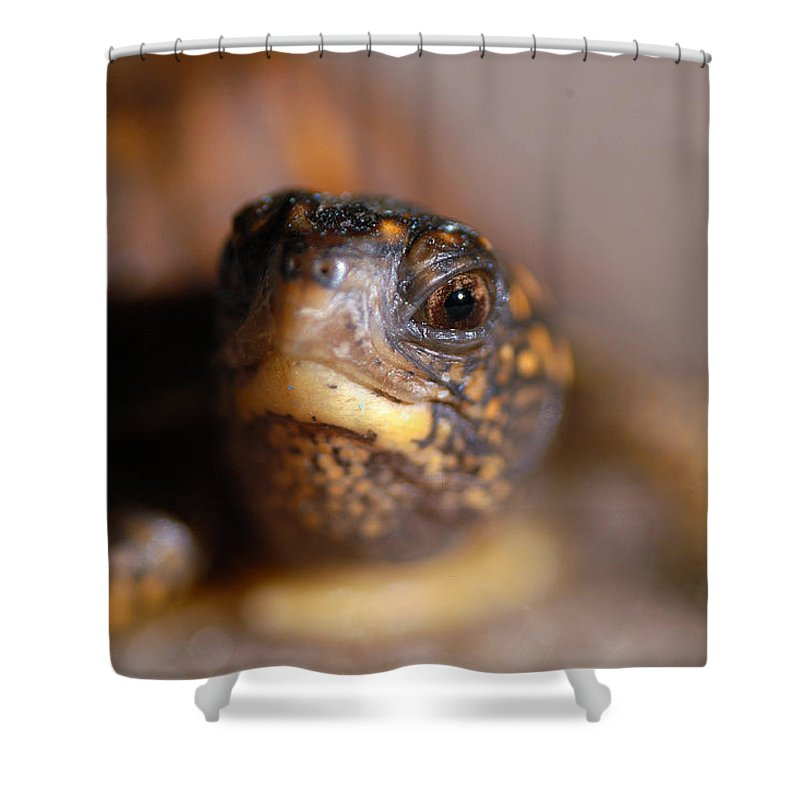 Clay Shower Curtain featuring the photograph Lucky by Clayton Bruster