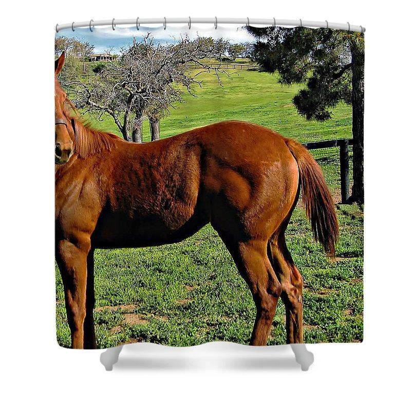 Horse Shower Curtain featuring the photograph Lucky Student by Steve Harrington