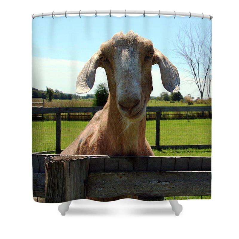 Goat Shower Curtain featuring the photograph Lucy by Joanne Coyle