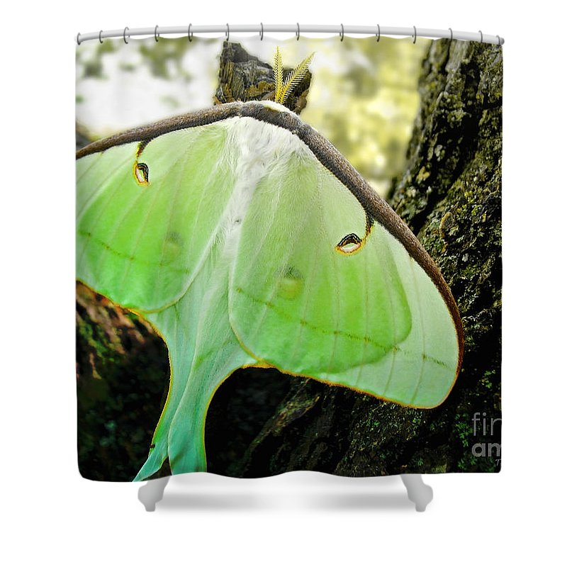 Macro Shower Curtain featuring the photograph Luna Moth No. 3 by Todd A Blanchard