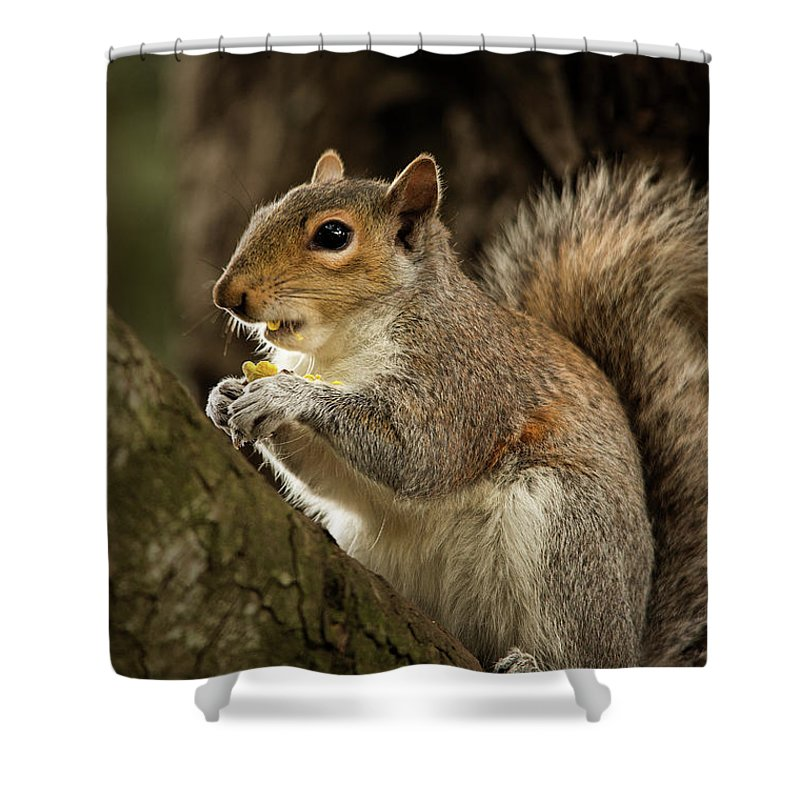 Animal Shower Curtain featuring the photograph Lunch by Bob Cournoyer