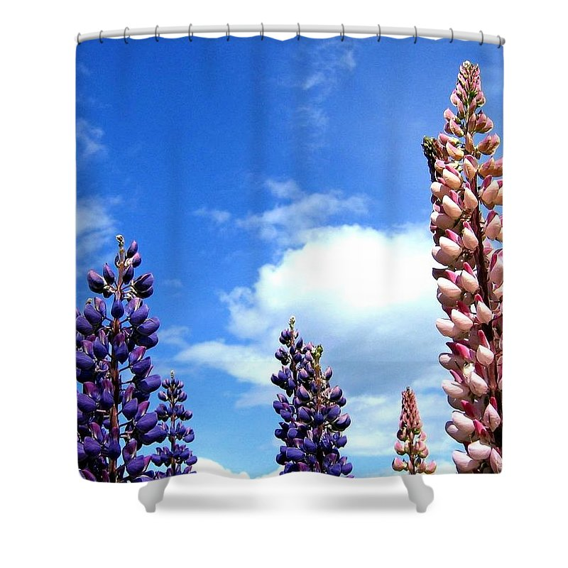 Lupins Shower Curtain featuring the photograph Lupins by Will Borden