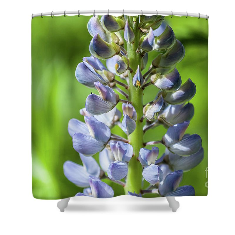 Lupine Shower Curtain featuring the photograph Lupinus Polyphyllus by Ilari