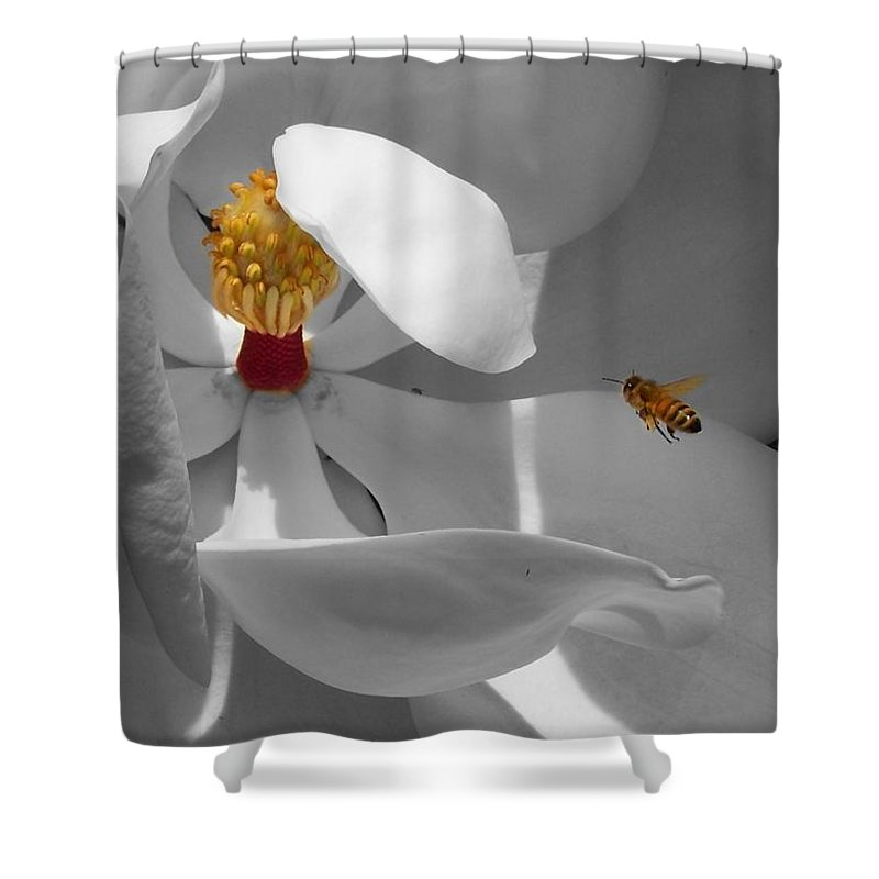 Magnolia Shower Curtain featuring the photograph Lure by Jai Johnson