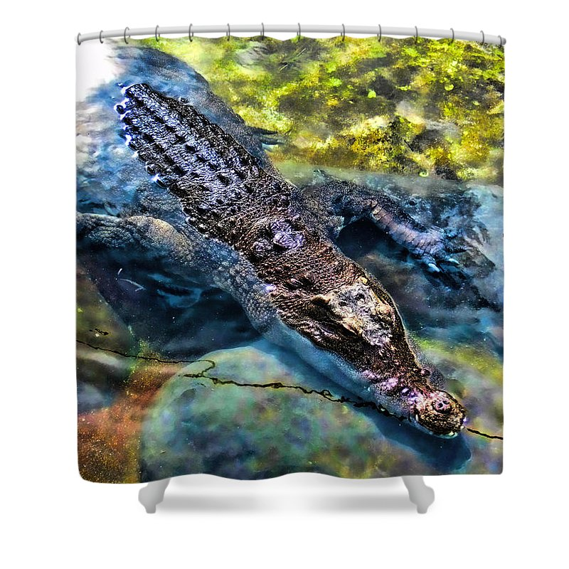 Reptile Shower Curtain featuring the photograph Lurking 1 by Kristalin Davis