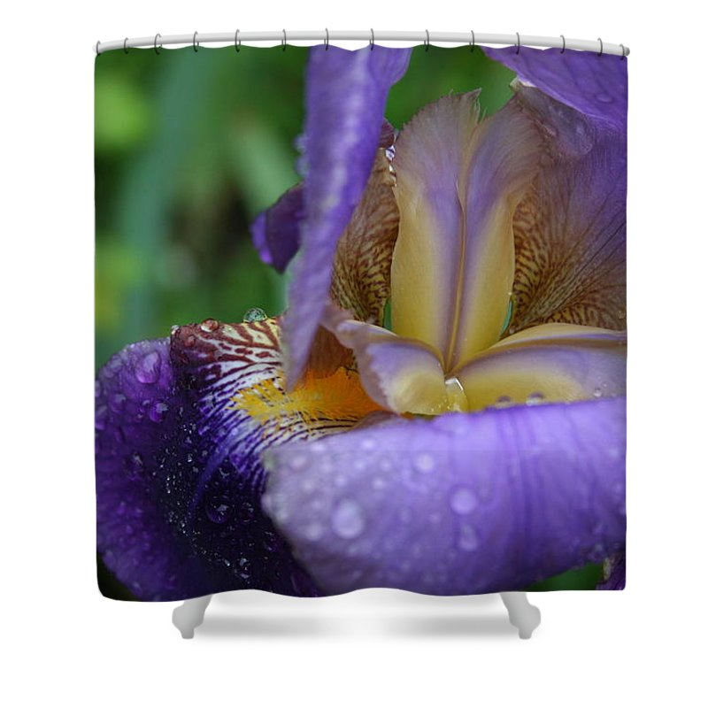 Iris Shower Curtain featuring the photograph Luscious Blooming Iris by Mary Gaines