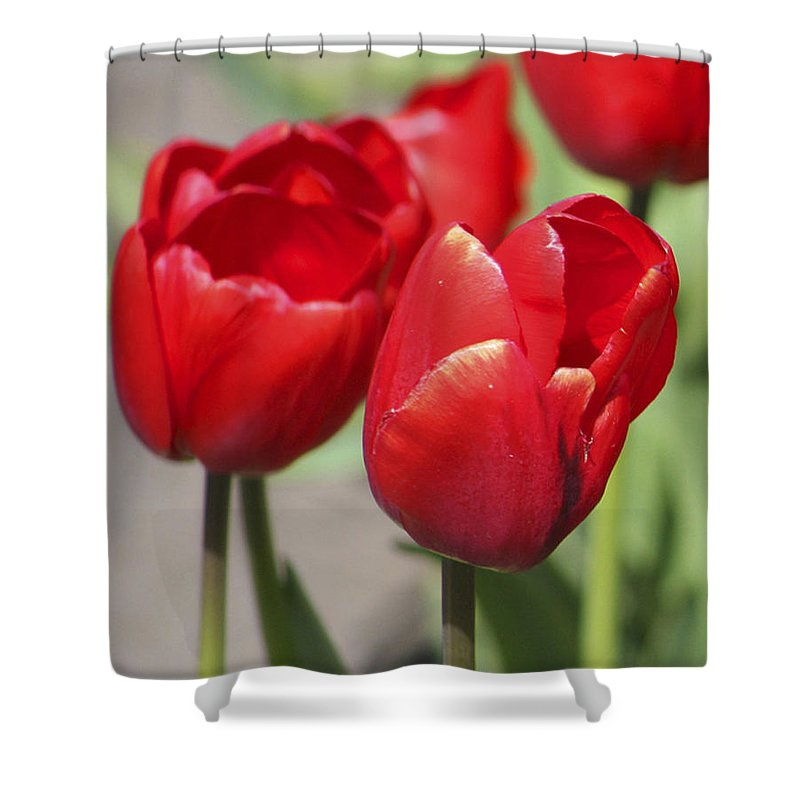 Tulips Shower Curtain featuring the photograph Luscious Tulips by Mary Gaines