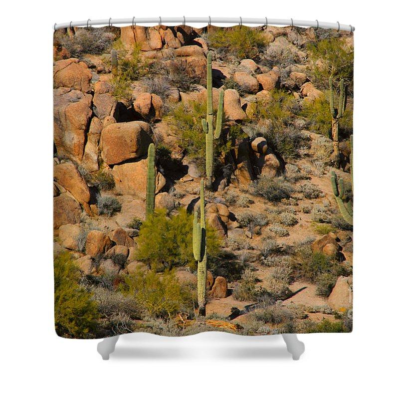 Arizona Shower Curtain featuring the photograph Lush Arizona Desert Landscape by James BO Insogna