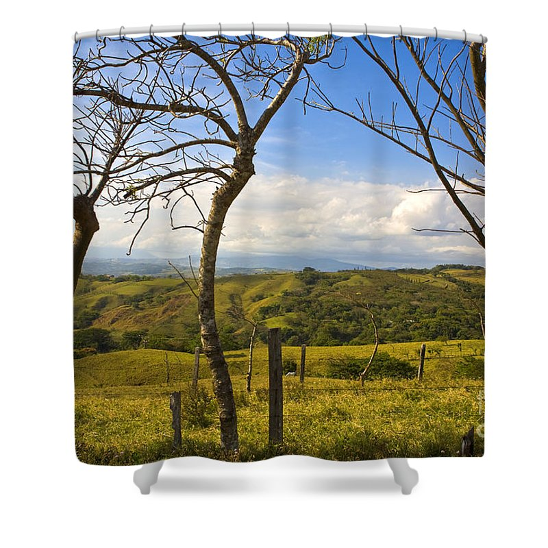 Tree Shower Curtain featuring the photograph Lush Land Leafless Trees I by Madeline Ellis