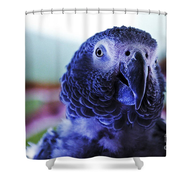 Macaw Shower Curtain featuring the photograph Macaw Parrot Blue Looking At You by David Frederick