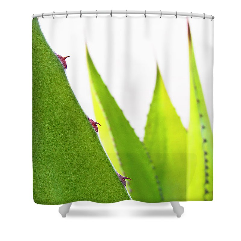 Mack The Knife Shower Curtain featuring the photograph Mack The Knife 1 by Skip Hunt