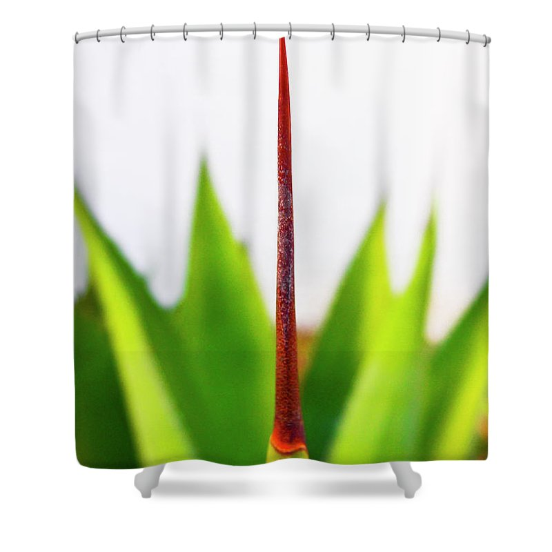 Mack The Knife Shower Curtain featuring the photograph Mack The Knife 3 by Skip Hunt