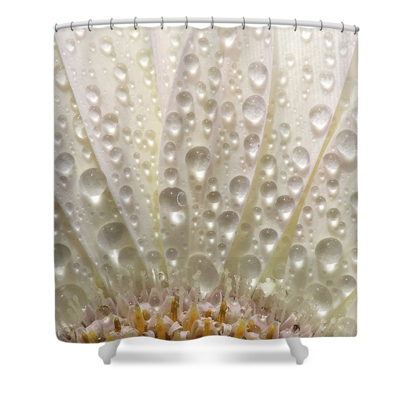 Daisy Shower Curtain featuring the digital art Macro Close Up Of A Daisy Flower by Mark Duffy